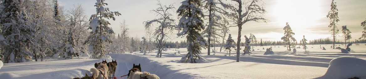 Lapland - Business Booking International